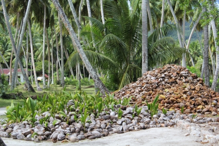 palmtrees: coconut, palmtrees Stock Photo
