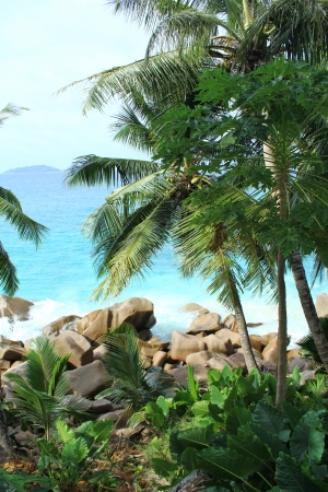 Palm trees, ocean, tropical landscape photo