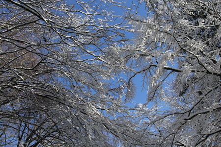 finesse: snowy trees