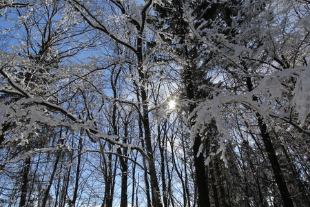 snowy trees photo