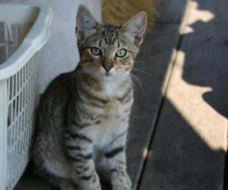 catfood: Grigio Kitten