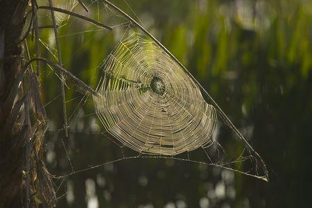 Een spinnenweb in de ochtend nevel