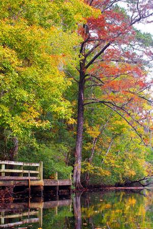blackwater: Fall foliage reflects in a blackwater creek.