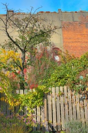 unkept: Overgrown Garden