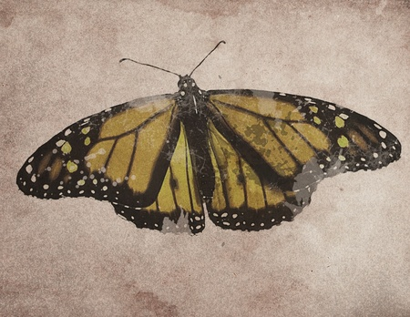 Butterfly Grunge photo