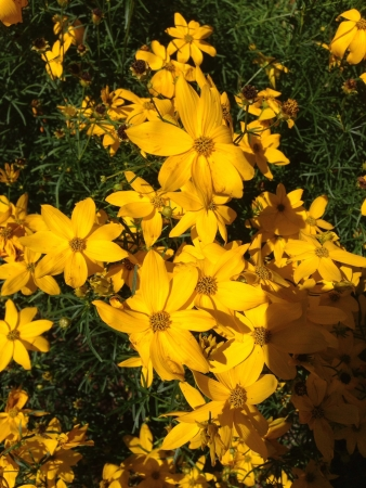 Group of yellow flowers on a sunny day.