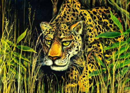 piercing: piercing look. leopard in deep jungle.