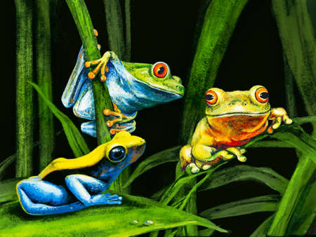 protecting: three funny frog