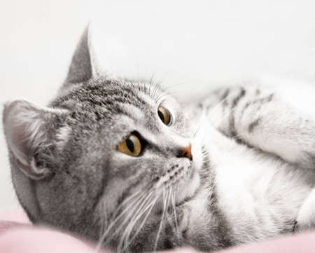 Gray cat listen Stock Photo - 4178568