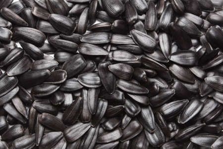 sunflower seeds: semillas
