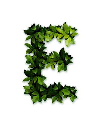 letter e: letter leaves E