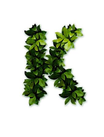 letter leaves k photo