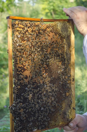 apiary: the man collects honey from a beehive with bees on an apiary