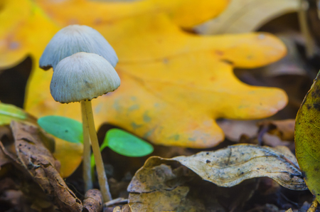 beautiful mushrooms in the wood in an autumn sunny weather Stock Photo