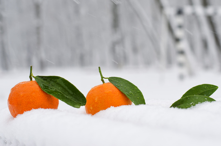 Fresh and juicy tangerine on the cold snow Stock Photo