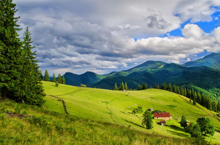 pasture on the mountainside in sunny weather Stock Photo