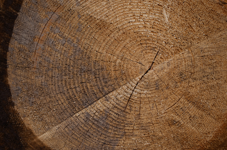 texture of a wood stump in the forest with a crack in the middle Banco de Imagens