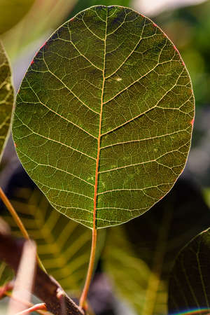 Silhouette of leaf in a garden