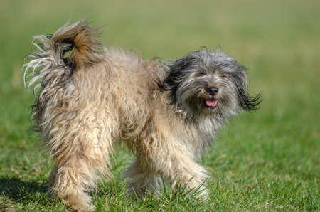Dog playing having fun in a meadow. Stock fotó