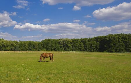 Horse grazing in a ranch