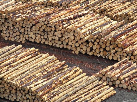 environmentalism: Stacked Logs