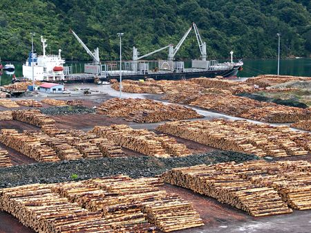 Stacked logs at dock in Marlborough Sounds, New Zealand Stock Photo