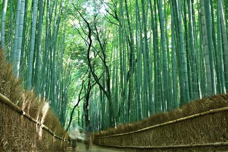 People strolling through the bamboo Forest in Arishayama, near Kyoto (intentional blurred motion)  photo