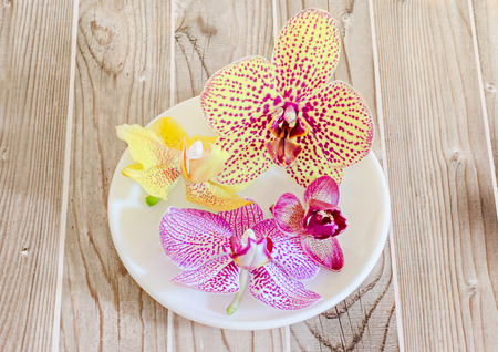 phal: Colored orchid flowers in a white plate, Orchidaceae, Phalaenopsis known as the Moth Orchid, abbreviated Phal. Wood background.