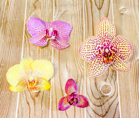 phal: Many types, collection of orchids flowers, purple, white, blue, yellow, pink. Orchidaceae, Phalaenopsis known as the Moth Orchid, abbreviated Phal. Wood background, isolated.