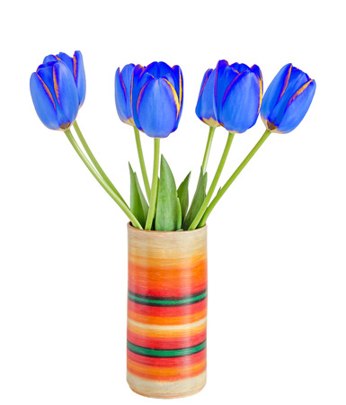 Blue tulips flowers with yellow stripes, colored flowerpot, vase, green leaves, close up, isolated on white background Stock Photo
