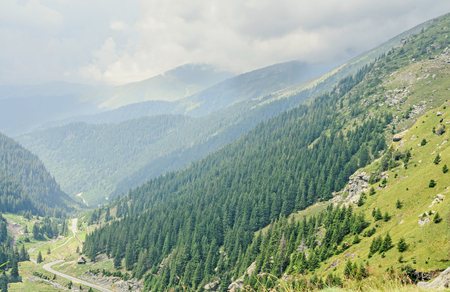 Carpathian mountains, Fagaras hills with green forest pines and grass, Transfagarasan road, blue sky Stock Photo
