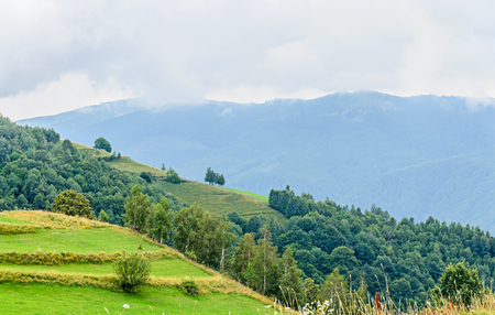 Green grass hills on the Transalpina road,  Parang Mountains, pine forests,  Carpathian Mountains.