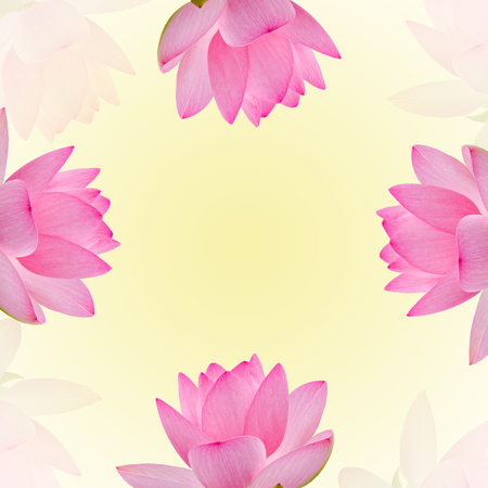 Pink nuphar flowers, water-lily, pond-lily, spatterdock, Nelumbo nucifera, also known as Indian lotus, sacred lotus, bean of India, lotus, gradient background.
