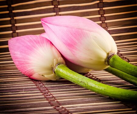 Pink lotus flowers, water lily bud, close up, wooden background