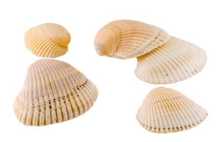 Sea colored shells, close up, isolated, white background.