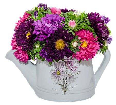 Vivid colored Callistephus chinensis flowers, common names include China aster and annual aster, in Romania as Ochiul Boului, in a white ceramic watercan, sprinkler, close up, isolated Stock Photo