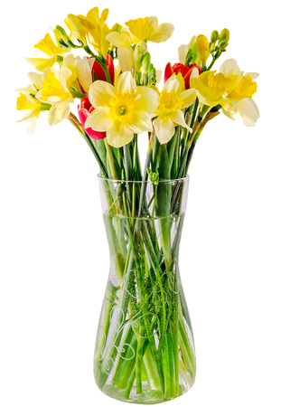 Yellow daffodils (narcissus) flowers in transparent vase, close up, white background.