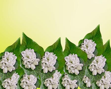 White Galanthus flowers, bouquet, floral arrangement (snowdrop, milk flower), In romanian know as Ghiocei.