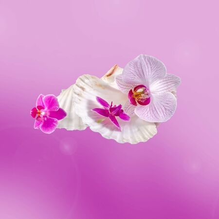 Colored orchid flowers and sea shells, isolated, cutout, Orhideea Phalaenopsis Stock Photo