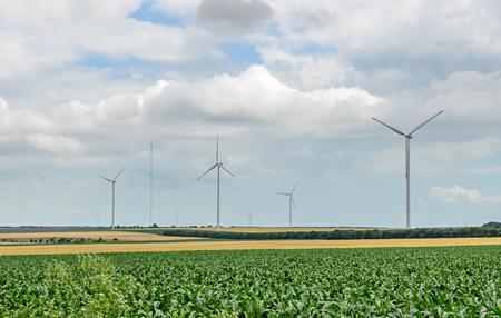 Eolian field and wind turbines farm, near yellow fllowers field, clouds blue sky.
