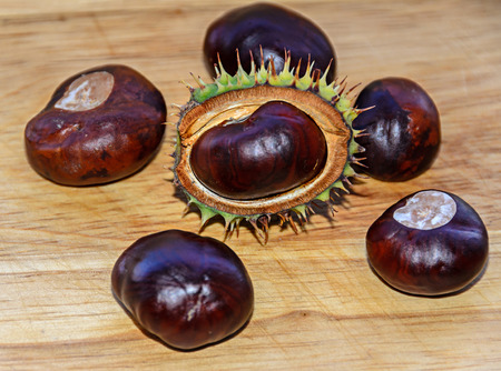 Brown chestnuts close up with spike green cover, wooden background. Banco de Imagens