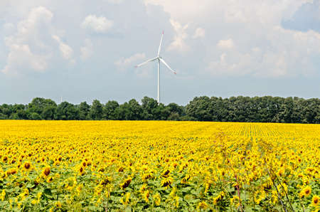 Sunflower yellow field countryside, blue sky, wind energy mill