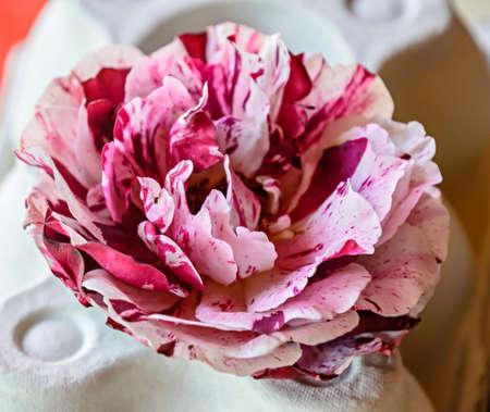 Pink and rose rose flower, green vegetation bokeh background. Banco de Imagens