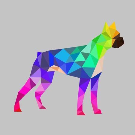 boxer dog: pol�gono perro del boxeador, colorido.