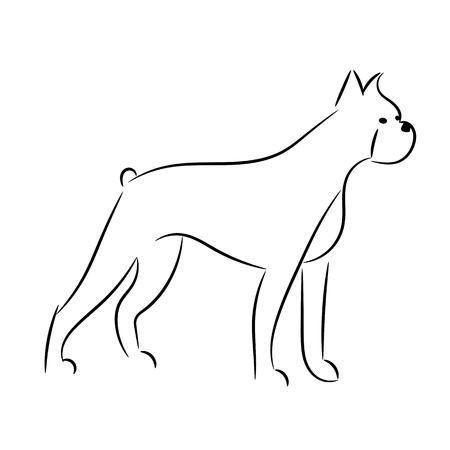 boxer dog: boxer dog