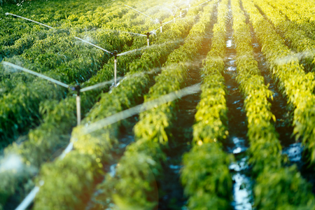 Irrigation system in function watering agriculutural plants 스톡 콘텐츠