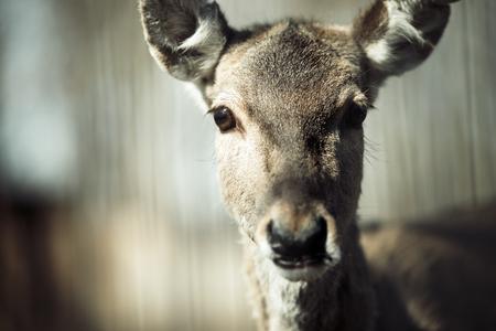 Mooie waakzame herten in een natuurlijke habitat van het wild levende dieren Stockfoto