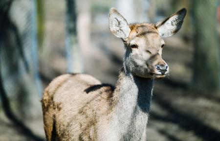 Beautiful alert deer in natural wildlife habitat