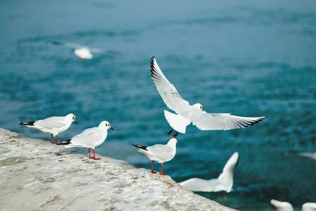 Image de fond de belles mouettes de mer volant Banque d'images - 75192578