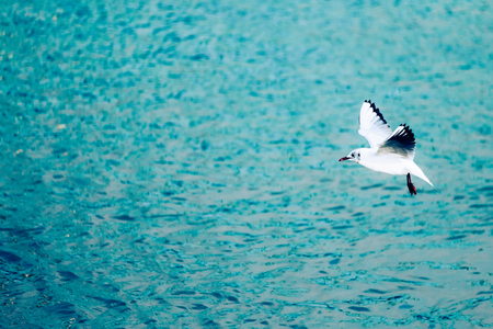 Background image of beautiful sea gulls flying Stock Photo - 75192589